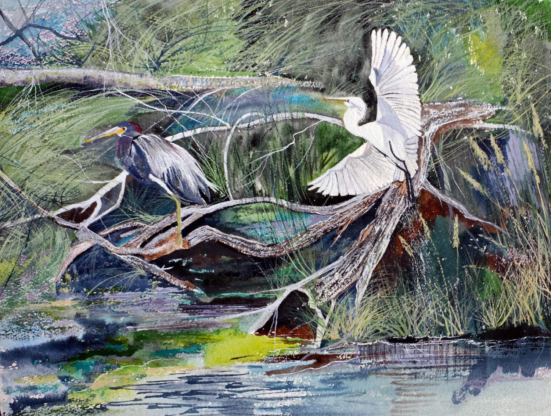 Assateague Island Birds
